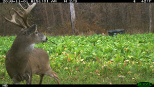 Boneyard Brassica Blend - Food Plot Seed