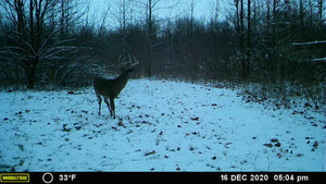 NEW!!! Triad Clover Blend - Food Plot Seed