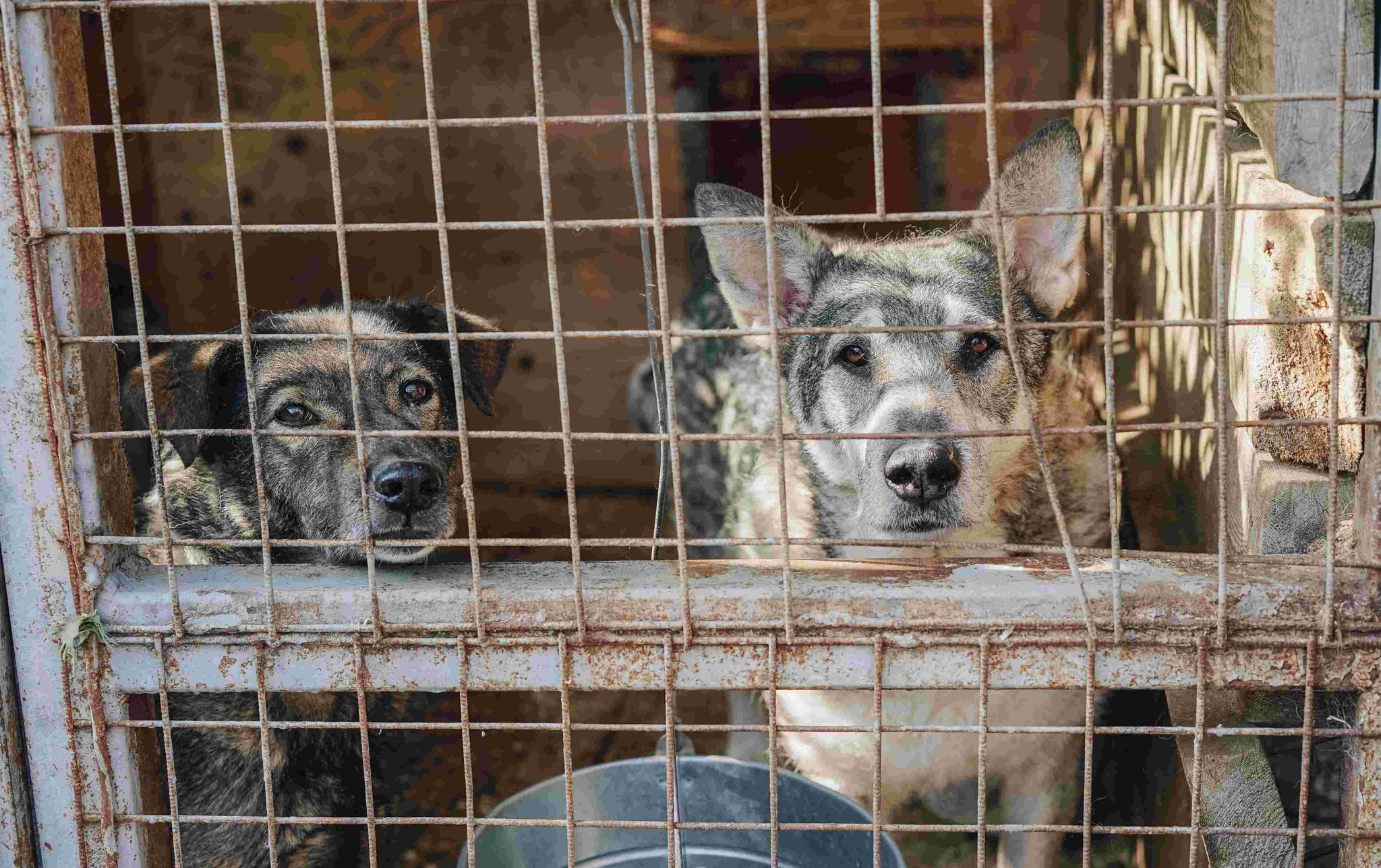 The Cost of Operating Animal Shelters