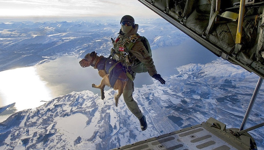 Navy Seal Checklist To Finding Missing Pets