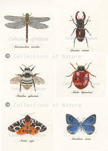 Britain's Eight Rarest Insects