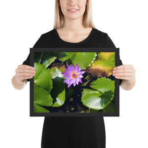Water Lily Framed Poster