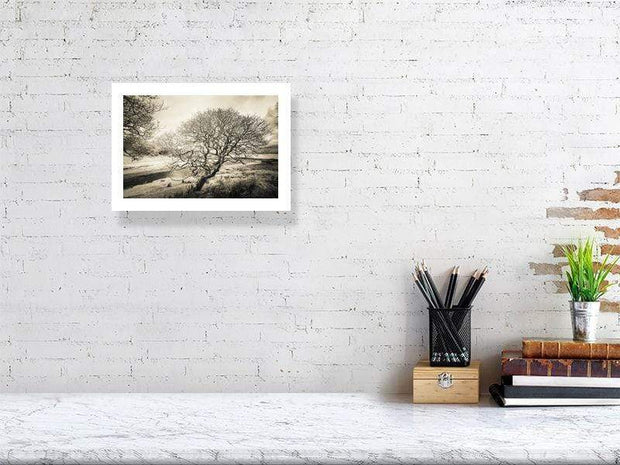 21.1 cm x 29.7 cm, 8.3 inches x 11.7 inches Spindly Tree Margadale River Black and White Fine Art Print by Wandering Spirits Global