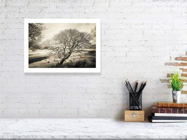 29.6 cm x 42.0 cm, 11.7 inches x 16.6 inches Spindly Tree Margadale River Black and White Fine Art Print by Wandering Spirits Global