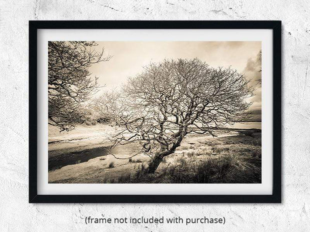 Spindly Tree Margadale River Black and White Fine Art Print by Wandering Spirits Global