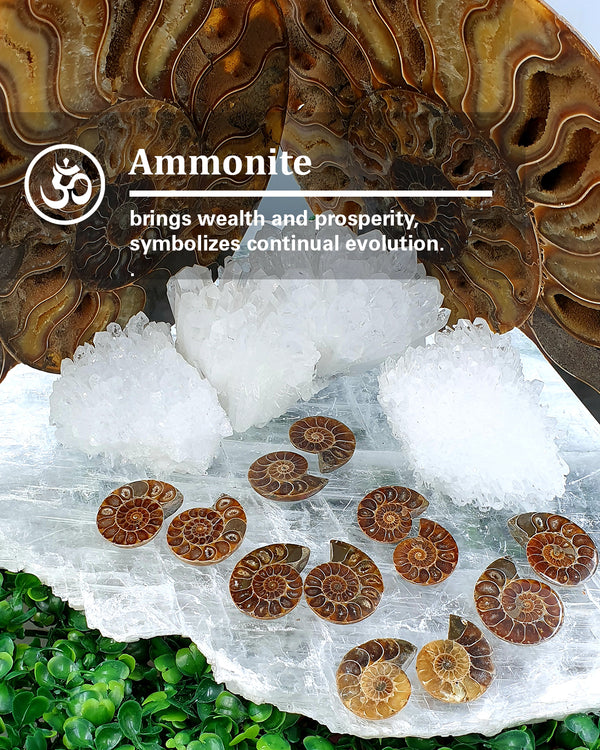 Ammonite small