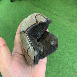 Septarian Dragon