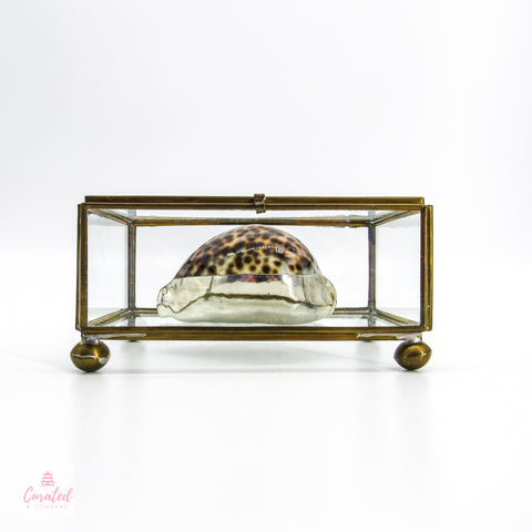Vintage Display Box with Shell