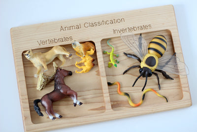 Wooden Animal Classification Sorter