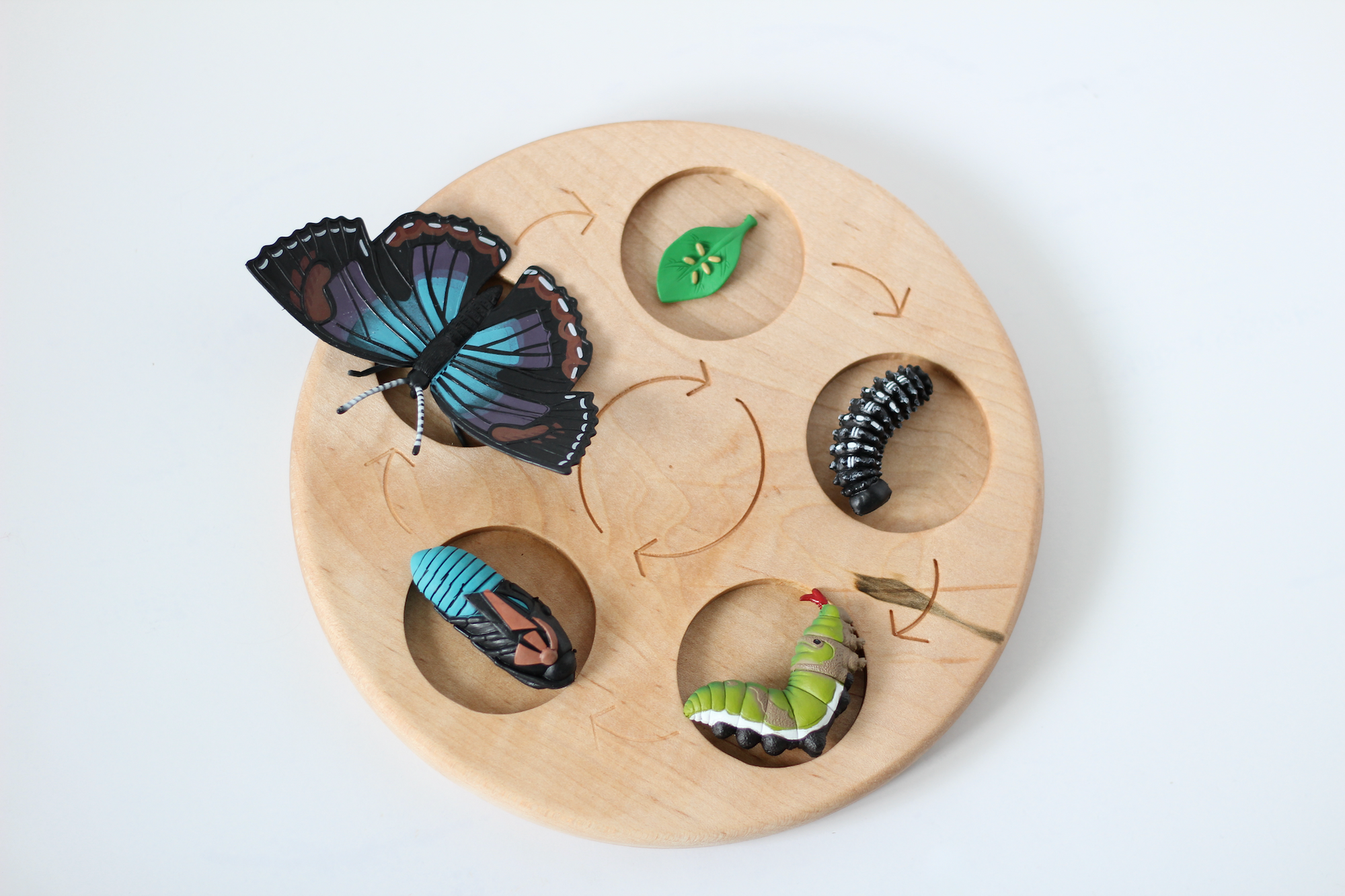 Wooden life cycle board for nature studies.