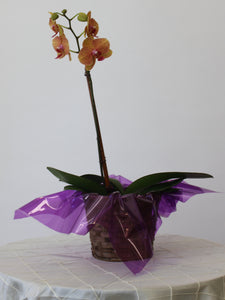 Single Orchid Basket
