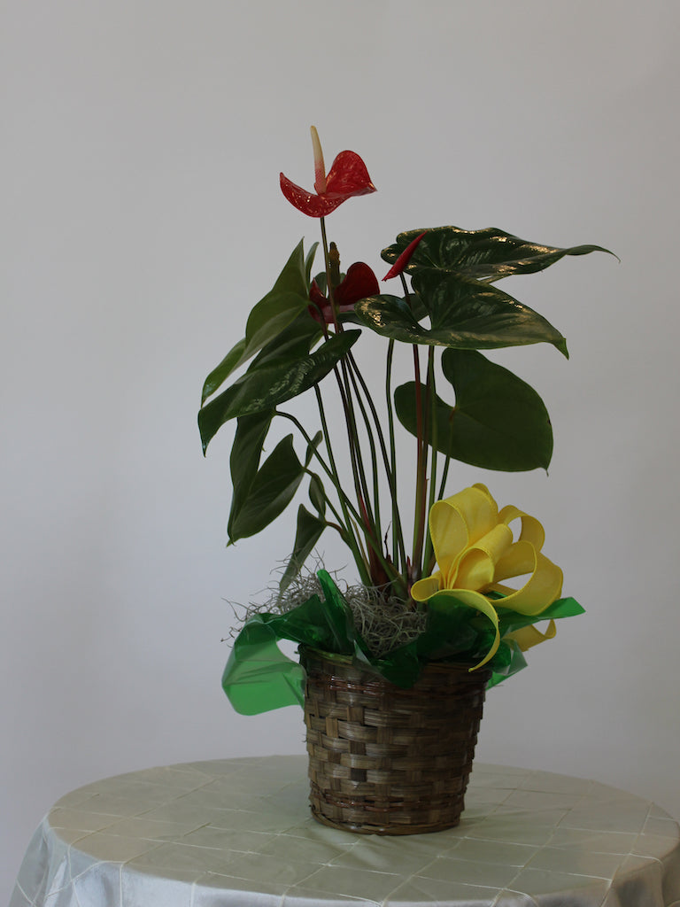 Single Plant Basket