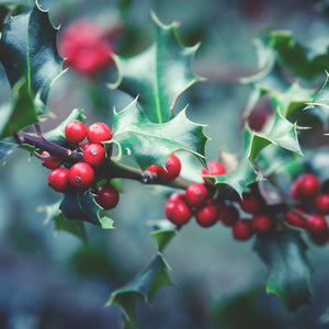 The Presence of Plants in Our Winter Traditions