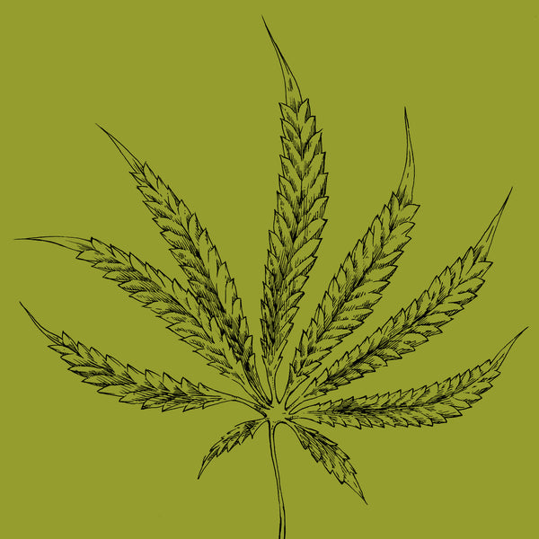 Hemp Sativa Botanical