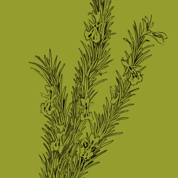 organic rosemary botanical