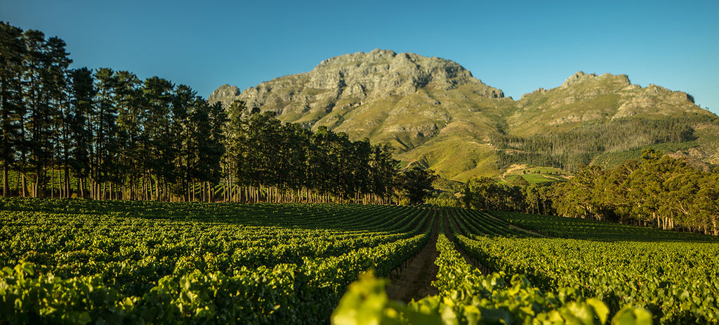 Franschhoek & Paarl South AFrican Winelands - WIne To Share