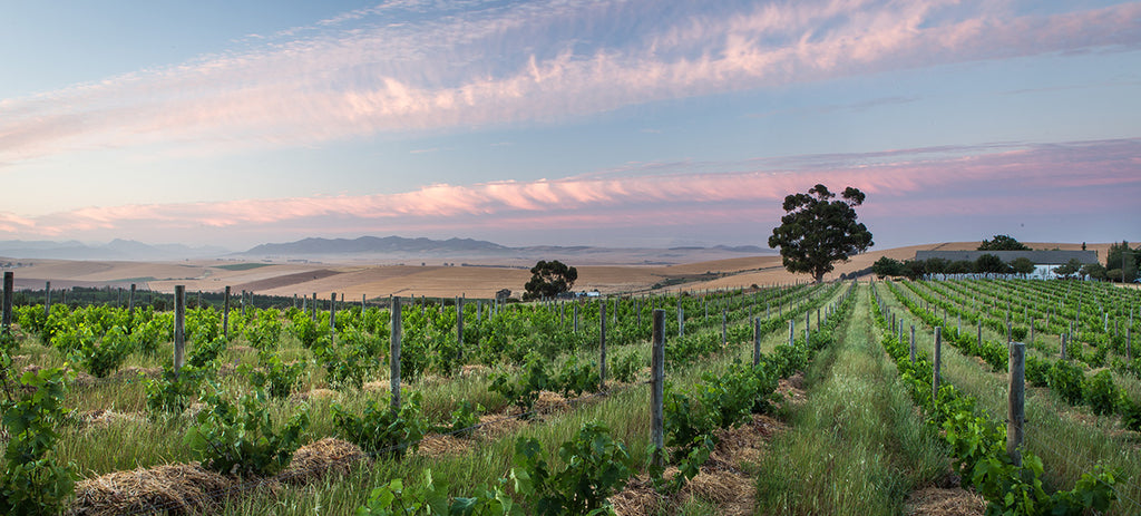 Swartland & Tulbagh - South African Winelands - Wine to Share