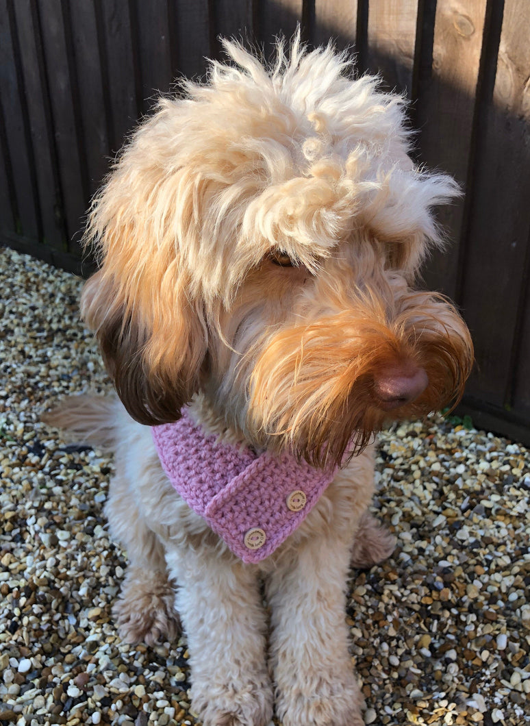 Gorgeous hand-crocheted Doggy Scarves - Made to Order with Puppy Love by Ali