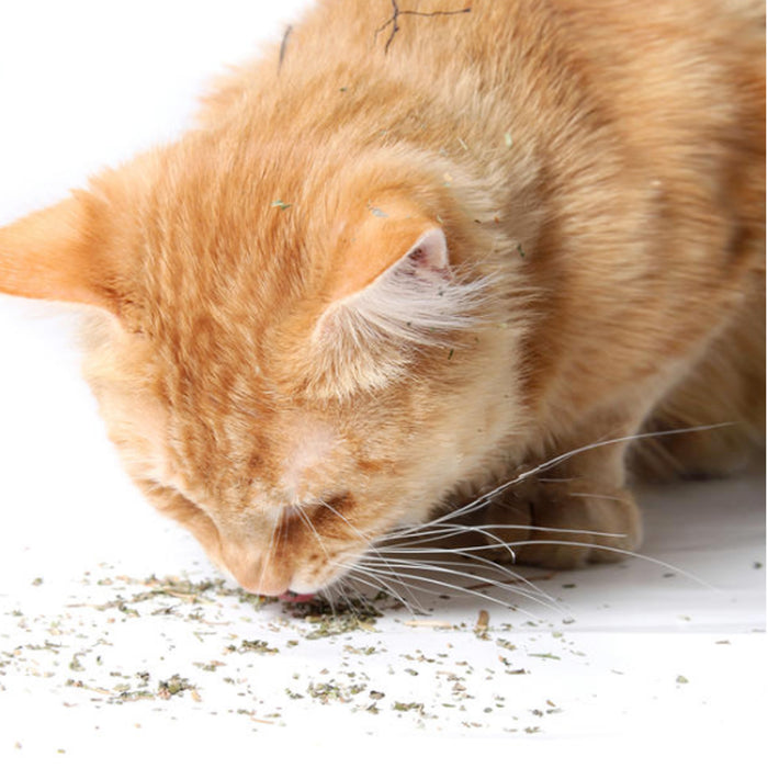 Best Pet Supplies Jar of 100% Natural Catnip for Cats and Kittens, the Best organic Catnip your Cats are guaranteed to love. No Additives Completely Safe and fun