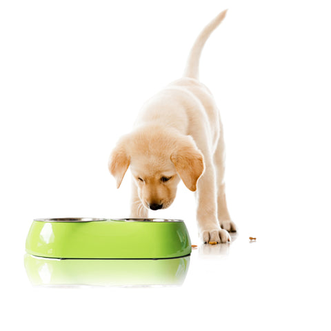 Best Pet Supplies Limited Edition Double Pet Bowl Base with 2 detachable Silver Bowls, Lime green Base With Labrador Puppy model