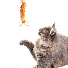 Fluffy Cat Wand Tickler with String Interactive Cat toy