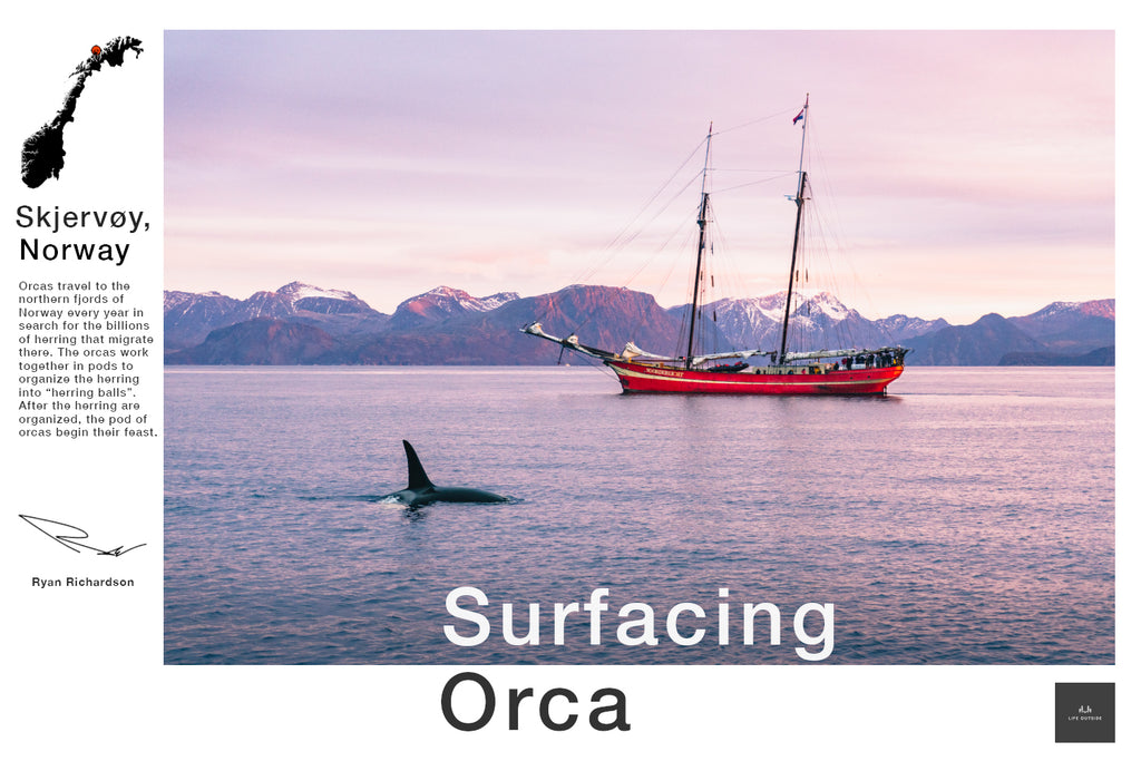 Surfacing Orca
