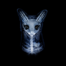 Load image into Gallery viewer, skullfox 3m tee