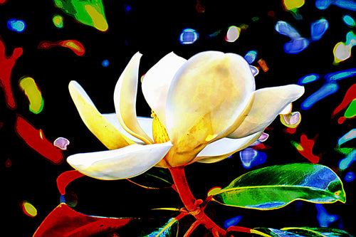 Whimsical Magnolia Digital Download UNSIGNED 20x13.3