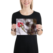 Load image into Gallery viewer, Dogwood Tree Bloom Poster