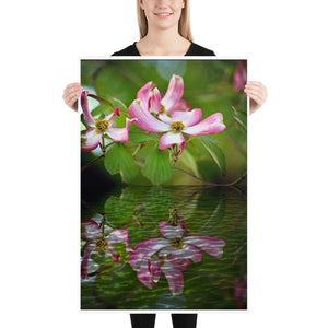 Dogwood Tree Blossom in Reflection Poster