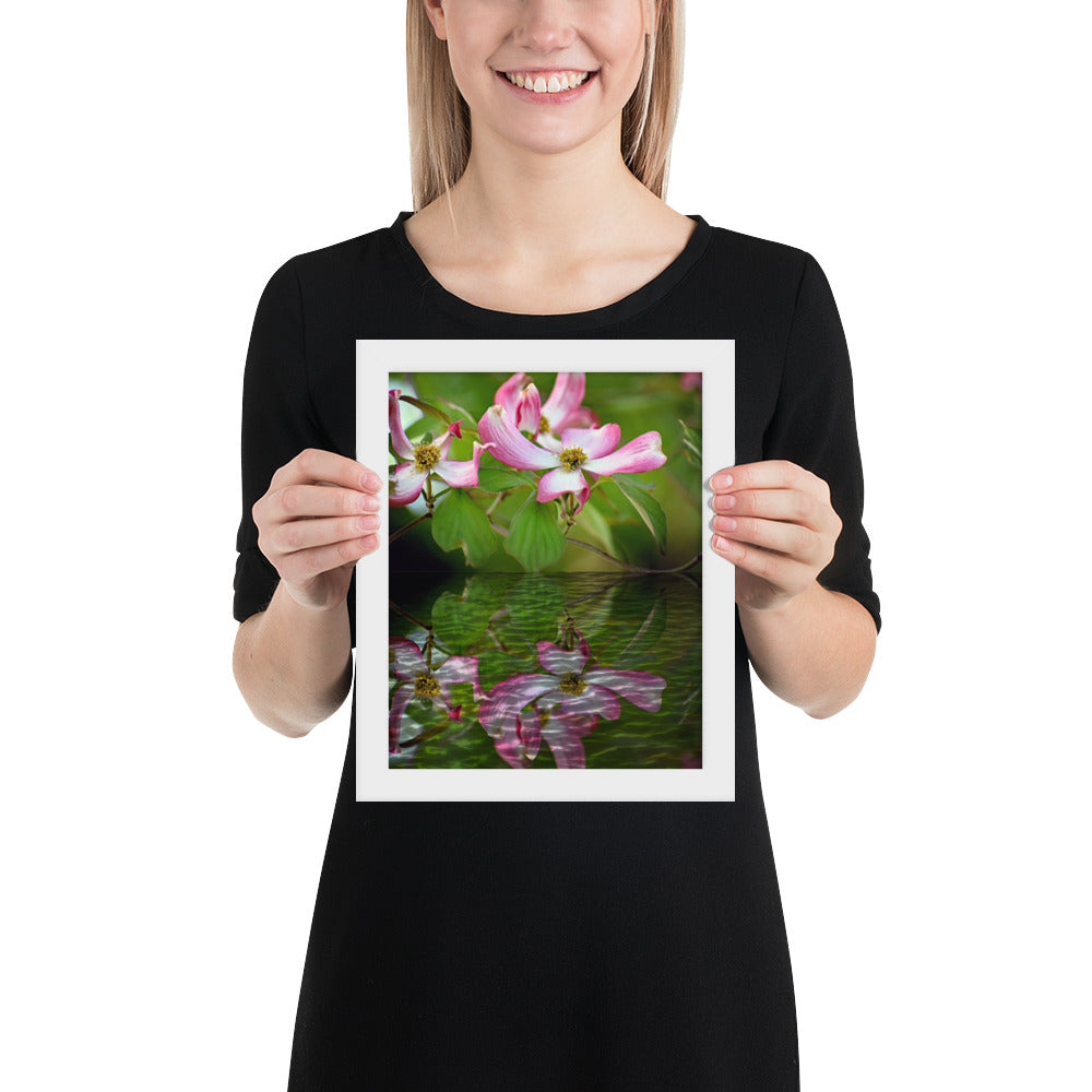Dogwood Tree Blossom in Reflection Framed poster