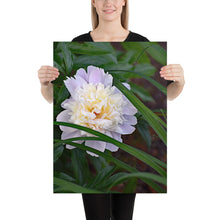 Load image into Gallery viewer, Peaceful Peony Poster