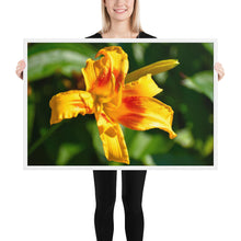 Load image into Gallery viewer, Daylily Glory Framed poster
