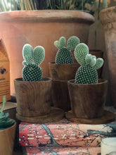 Load image into Gallery viewer, PLANTE - Opuntia kaktus
