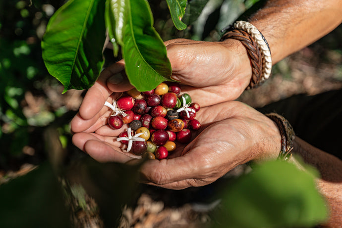Organic Coffee Versus Non-Organic Coffee: 3 Reasons Why You Should Switch