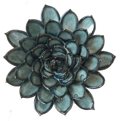 Large Succulent Blue Grey