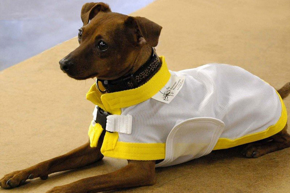 canine cooling coat