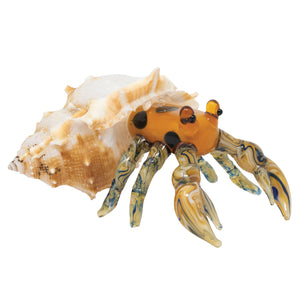 Marble Hermit Crab: 2pc