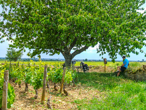Cycling Burgundy vineyards and cherry trees ConnalKit