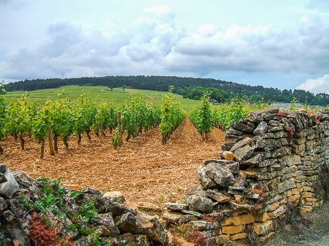 Vineyards of Burgundy ConnalKit
