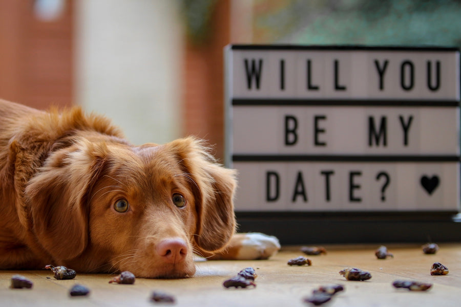 7 Ways to Celebrate Valentine's Day with you Dog