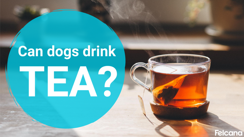 Can Dogs Drink Tea?: The Benefits and Dangers Of Tea For Dogs