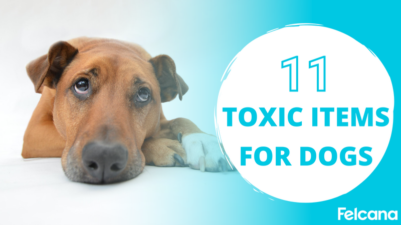 Top 11 Common Household Items Toxic to Dogs