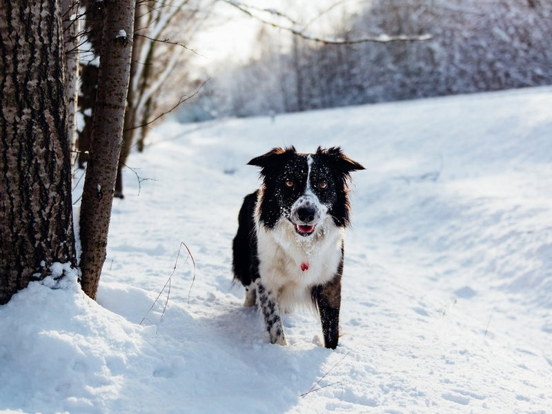 17 Tips For What You Can Do for Your Dog This Winter