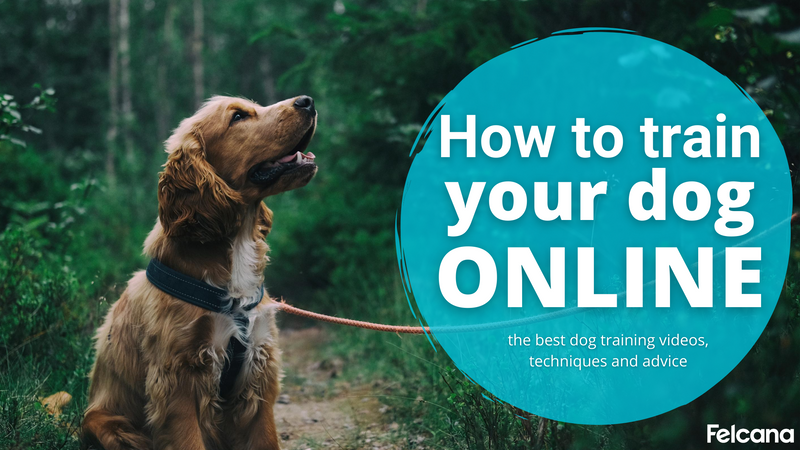 How To Train Your Dog Online: The Best Dog Training Videos, Techniques and Advice
