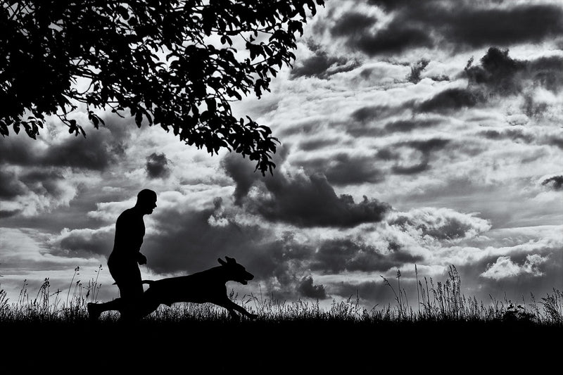 8 Top Tips For Running With Your Dog!