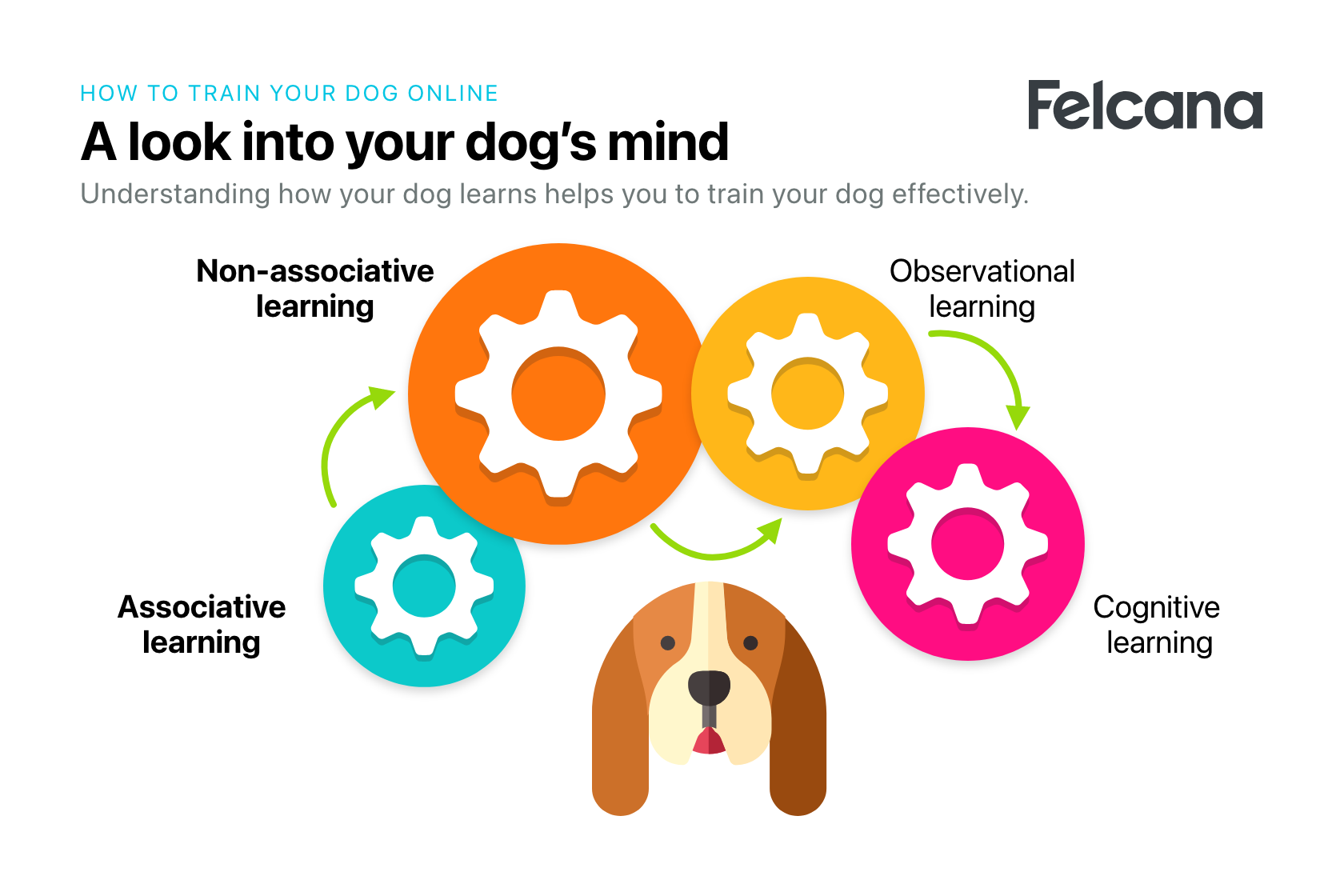 Four cog wheels explaining four different ways dogs learn to aid training