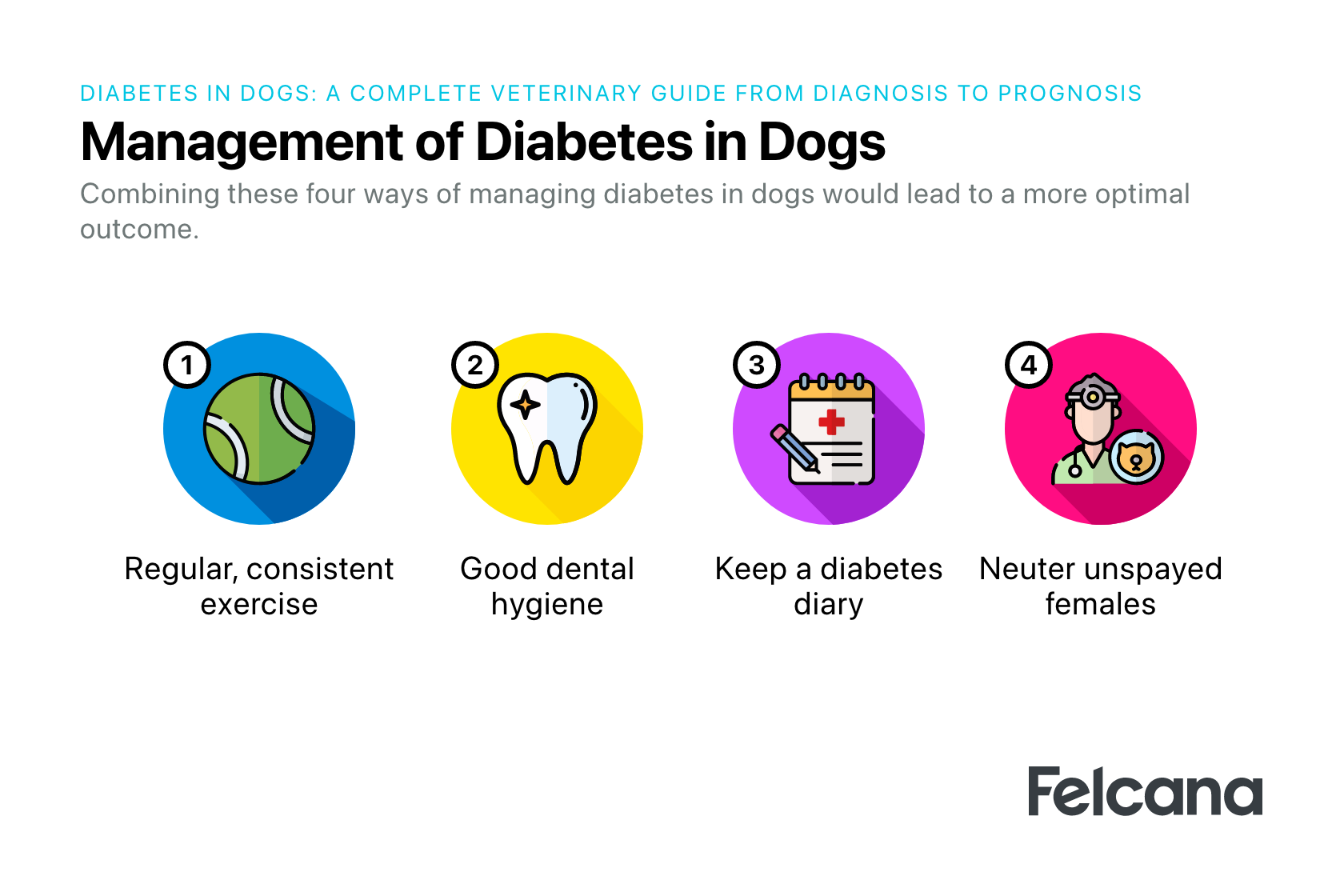 Lifestyle changes to manage dog diabetes, mainly consistent exercise, keeping logbook, good dental hygiene, spaying females.