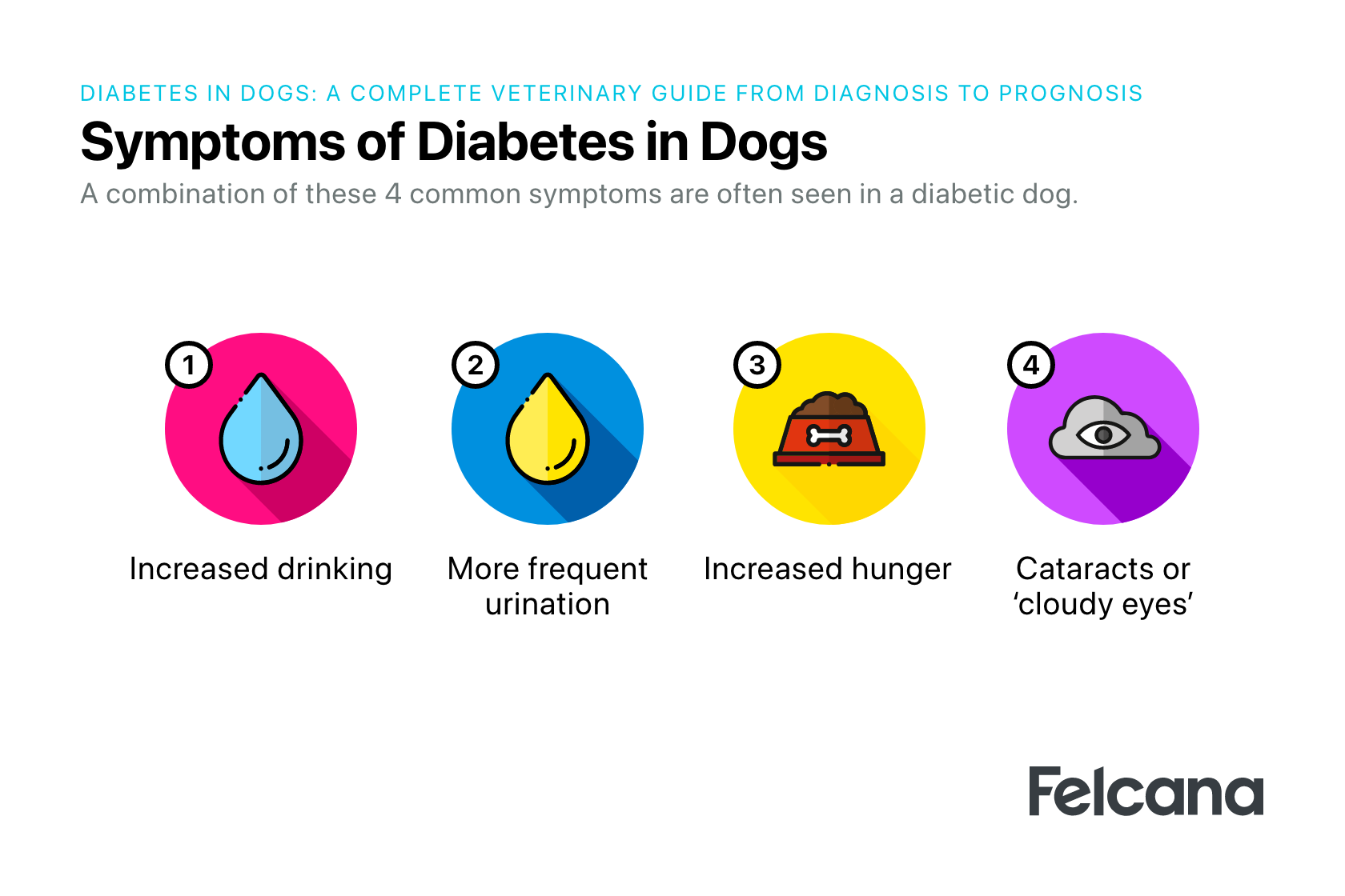 4 main symptoms of diabetes in dogs, mainly increased hunger, increased thirst, increased urination, cataracts