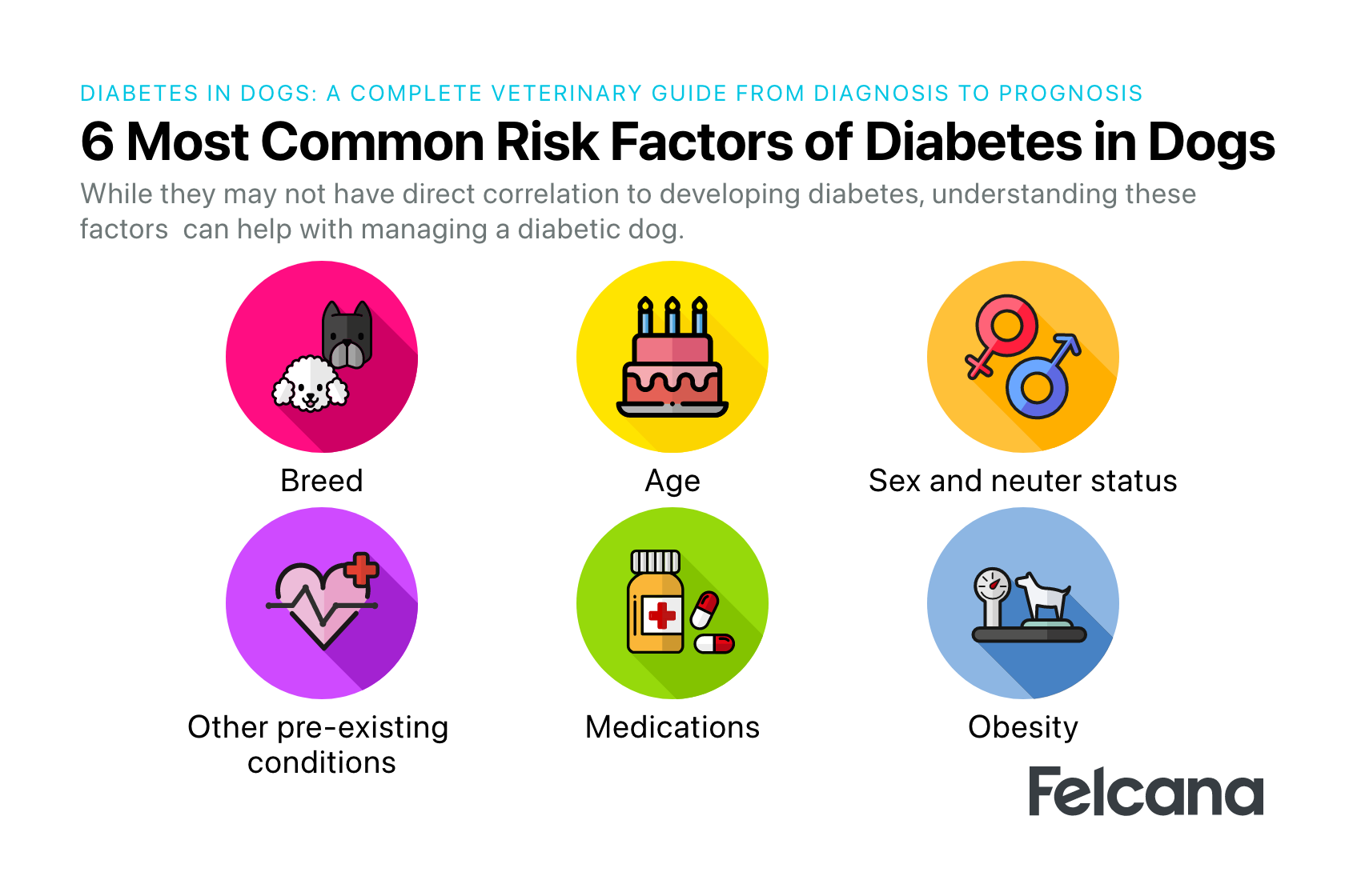 Dog diabetes risk factors, including breed, age, sex, neuter status, pre-existing condition, medications and obesity.